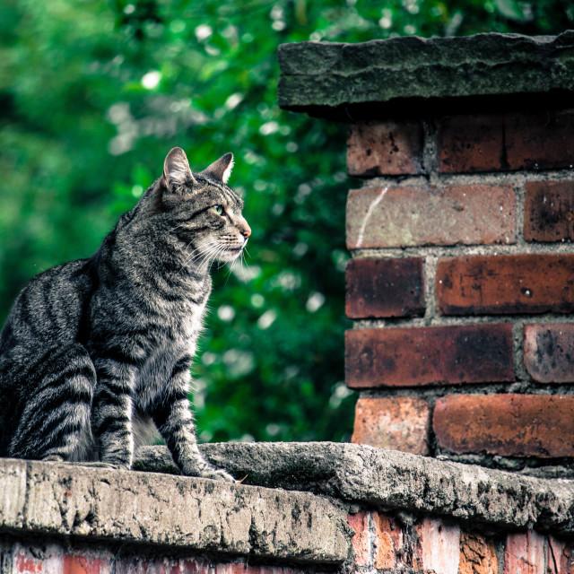 """Wall Cat"" stock image"