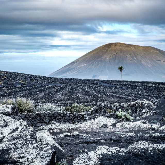 """Volcanoe landscape in Lanzarote, Canary Islands, Spain"" stock image"