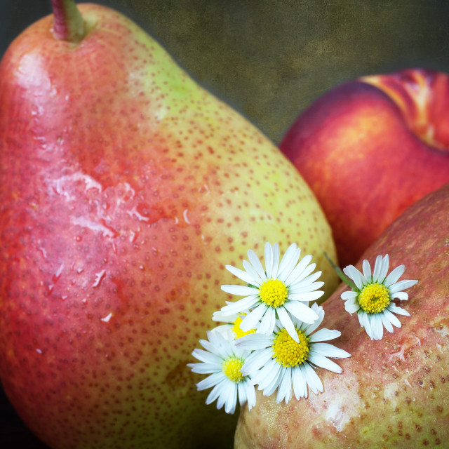 """Pears and Daisies"" stock image"