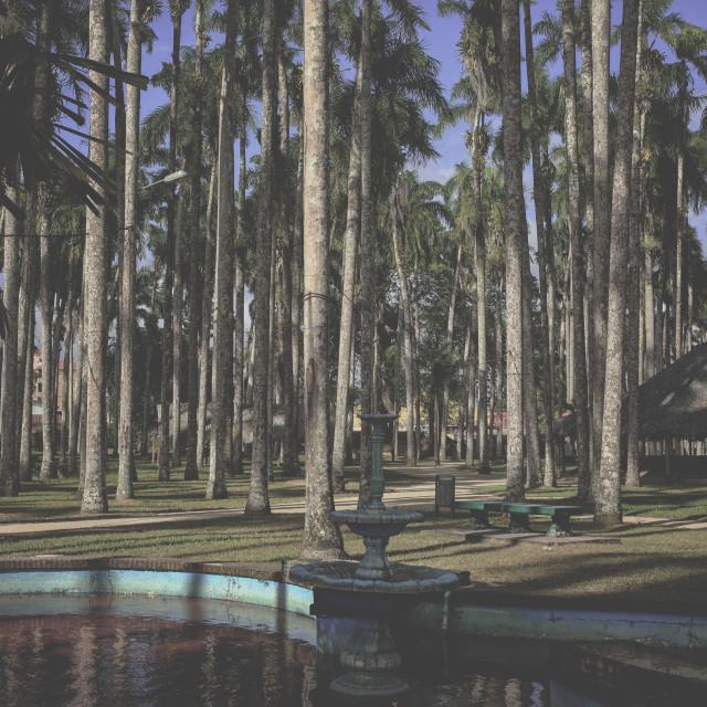 """""""Palm garden, Paramaribo, Suriname"""" stock image"""