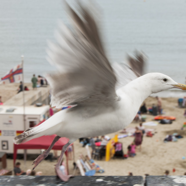 """Seagull at Lyme Regis."" stock image"