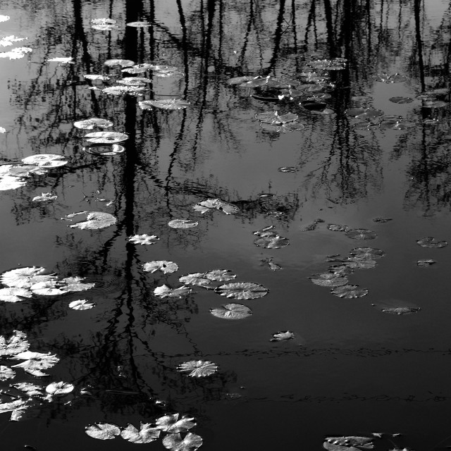 """""""Pond reflections"""" stock image"""