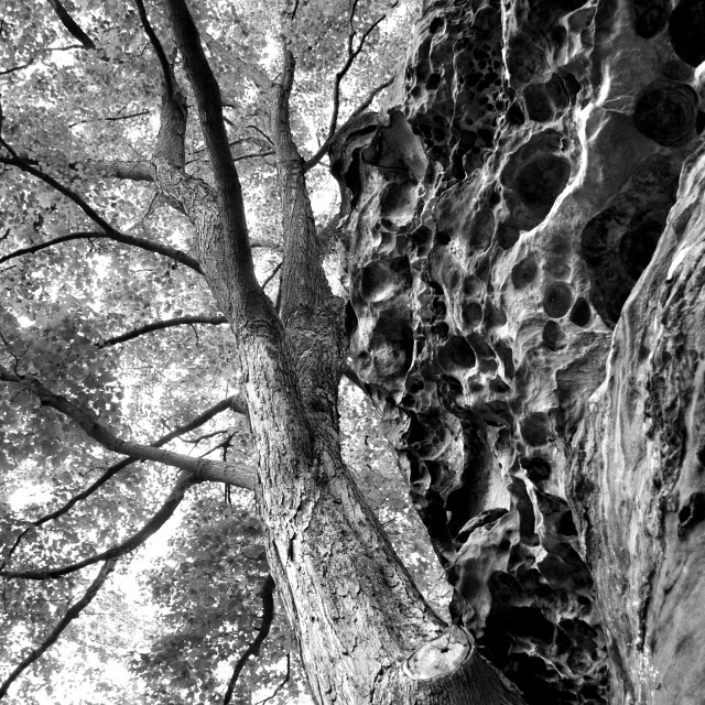 """Tree & rock"" stock image"