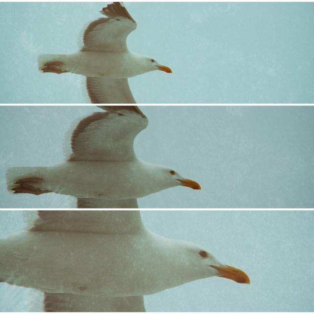 """Seagull Art"" stock image"