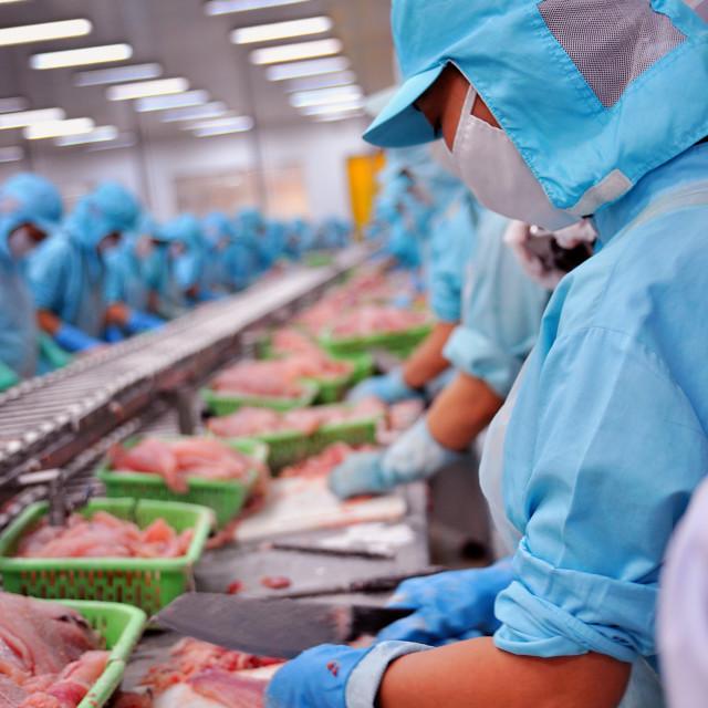 """""""Filleting pangasius or Vietnamese catfish"""" stock image"""