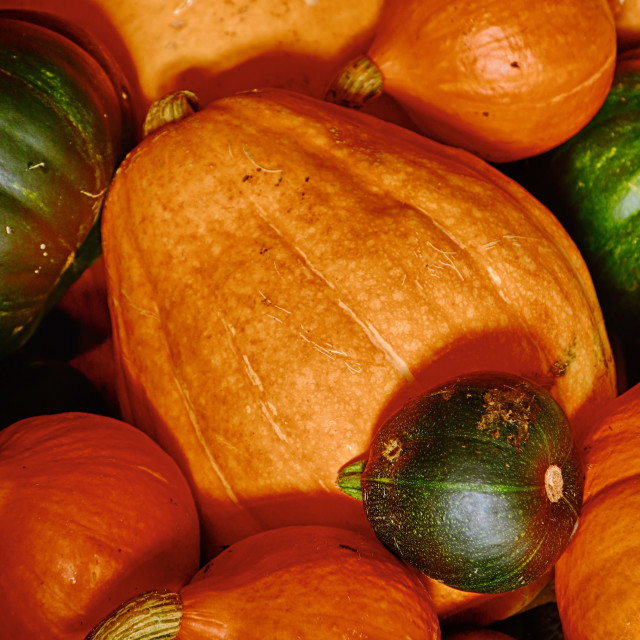 """Pumpkin colours"" stock image"
