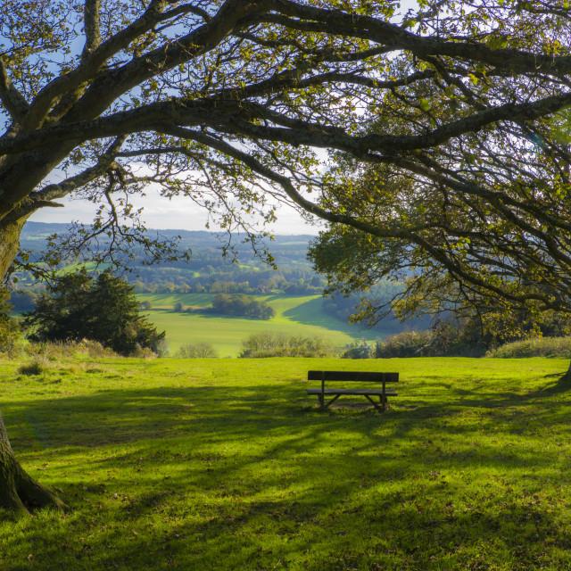 """""""Newlands Corner ,Surrey"""" stock image"""