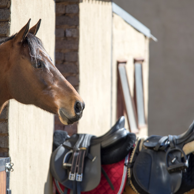 """Horse in stables"" stock image"