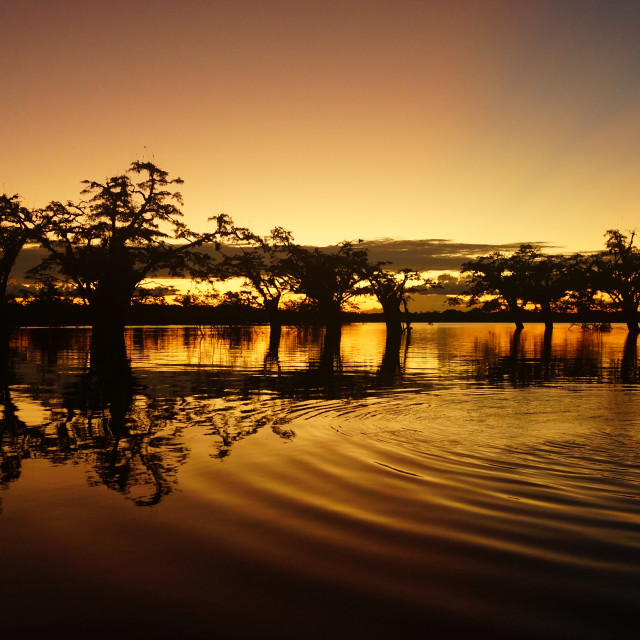 """Sunset in Cuyabeno lagoon in the Ecuadorian Amazon"" stock image"