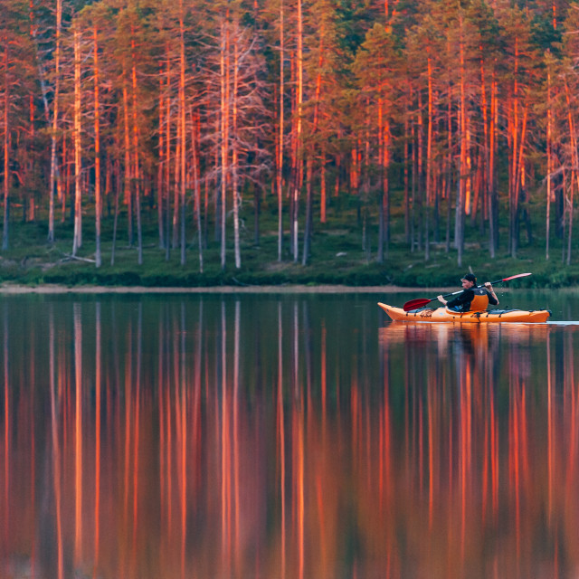 """Trees on fire, Finland"" stock image"