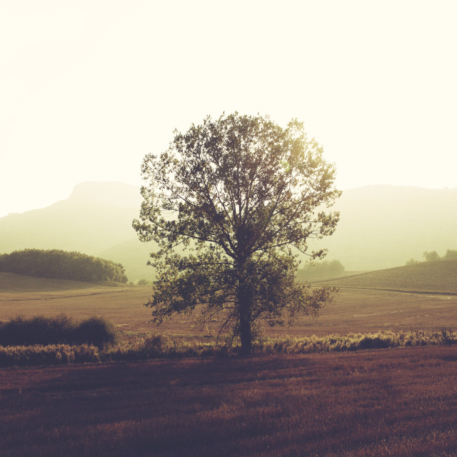 """Beautiful morning"" stock image"
