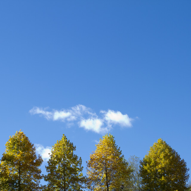 """""""Trees and blue sky"""" stock image"""