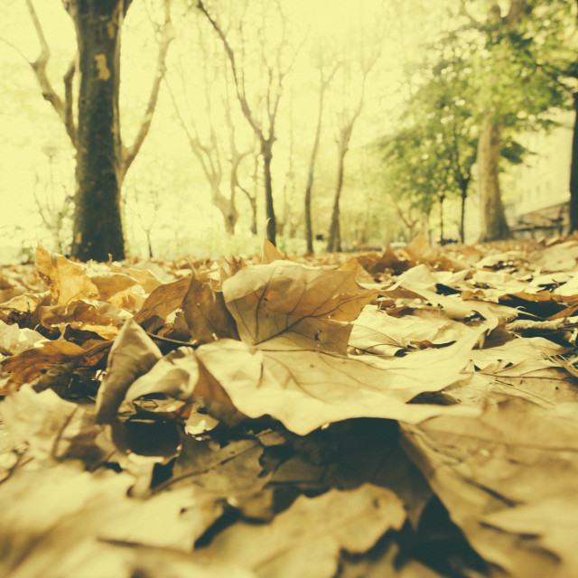 """Dry autumn leaves"" stock image"