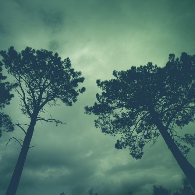 """Tree with stormy sky"" stock image"