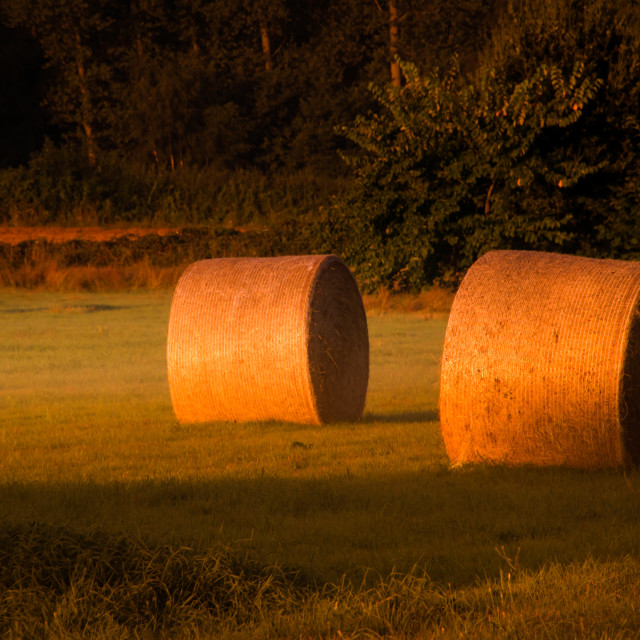 """Hay in the early morning sun"" stock image"