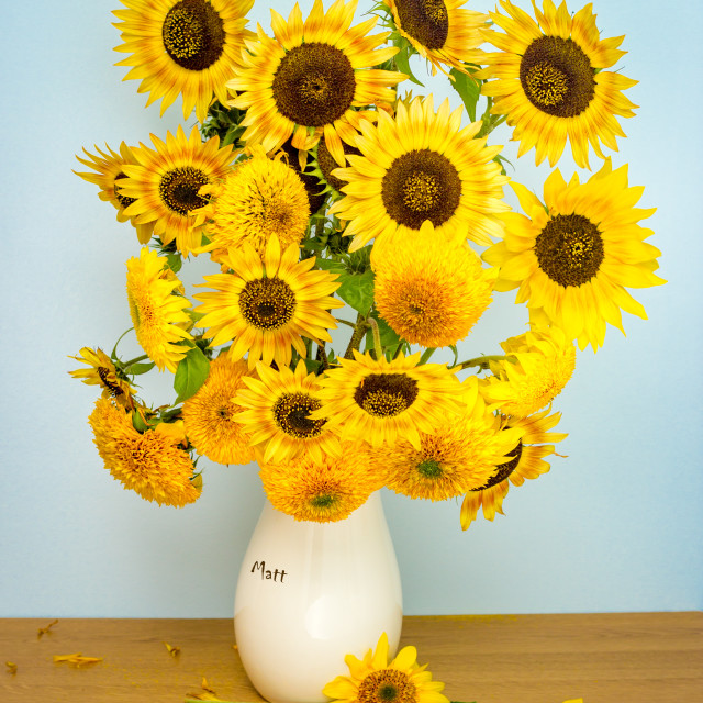 """""""Sunflowers in a Vase"""" stock image"""