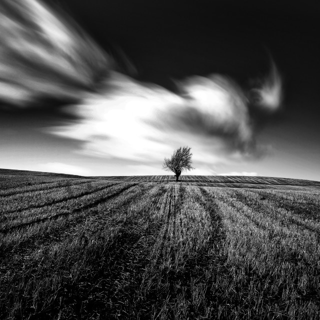 """Lone Tree in the clouds"" stock image"