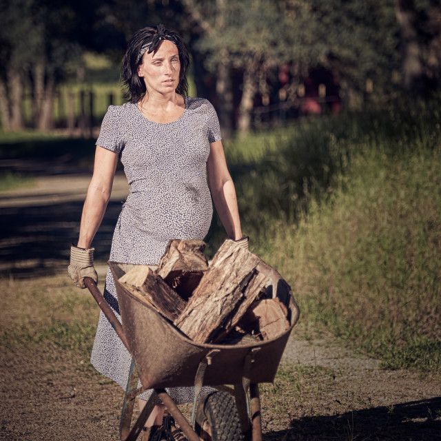 """A Pregnant Woman Pushing a Wheelbarrow Full of Chopped Wood."" stock image"