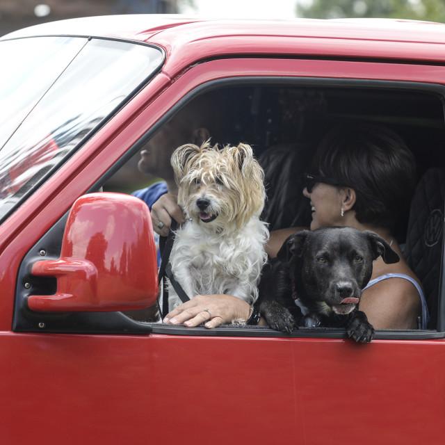"""""""VW camper van show 5"""" stock image"""