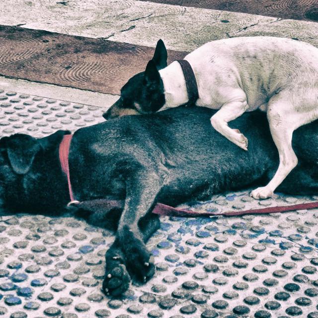 """Bosom Doggie Buddies"" stock image"