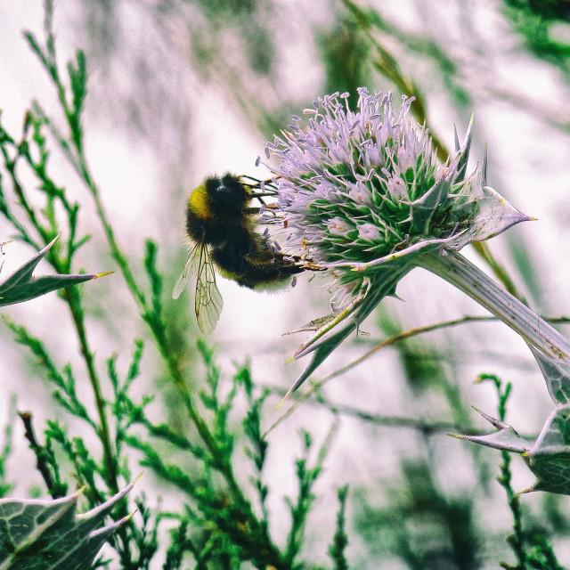 """Bee Getting Its Sweet On"" stock image"