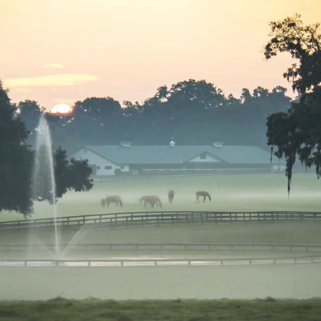 """7275BD2 Thoroughbred horses farm scenic"" stock image"