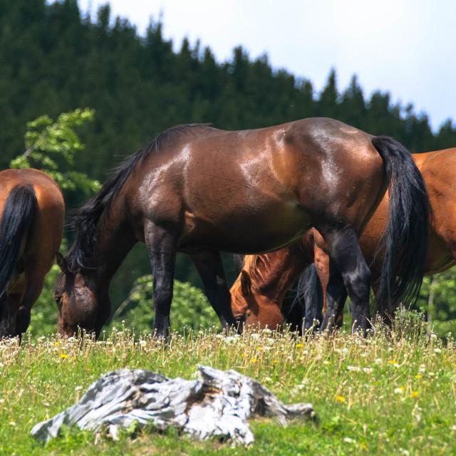 """Mustangs"" stock image"