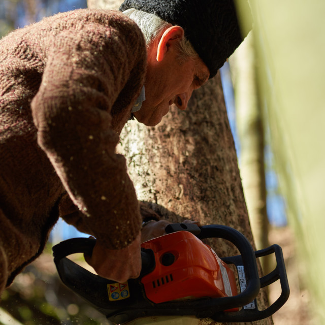 """Old woodcutter at work with chainsaw"" stock image"