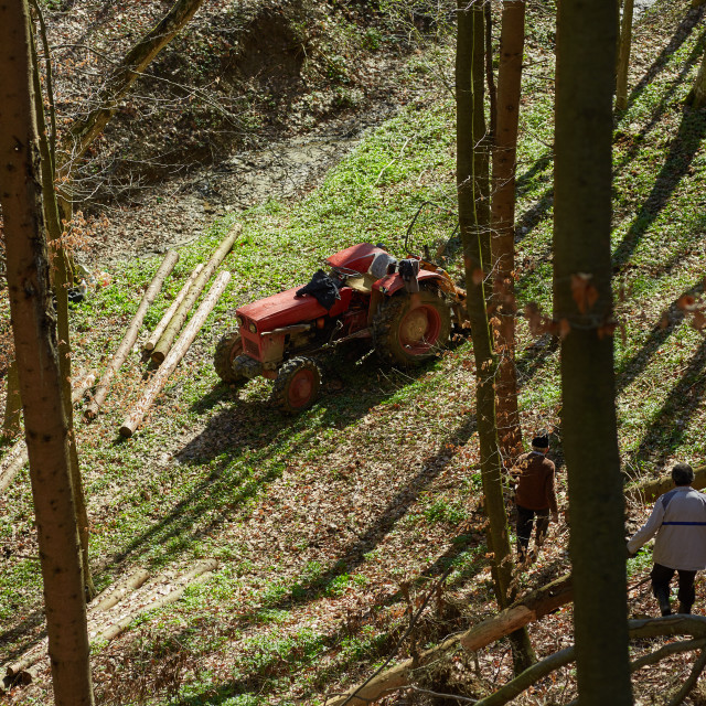 """Woodcutters using a logging tractor with winch"" stock image"