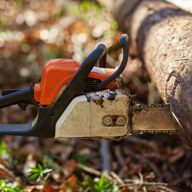 """""""Chainsaw stuck into a tree"""" stock image"""