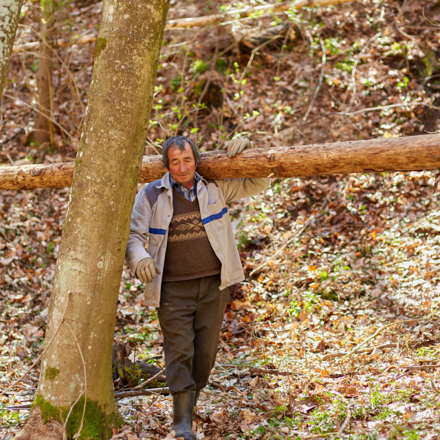 """""""Senior woodcutter with heavy log on shoulder"""" stock image"""