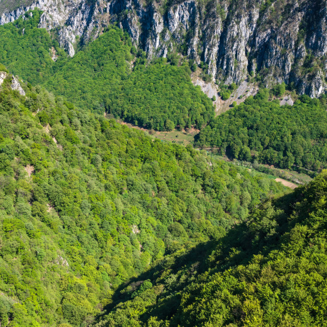 """""""Mountains and valley with forests"""" stock image"""