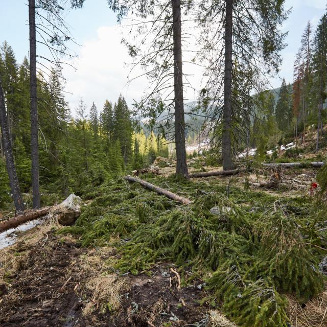 """Deforestation in Romania"" stock image"