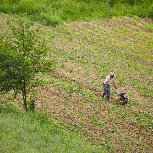 """Young farmer weeding with a tiller"" stock image"