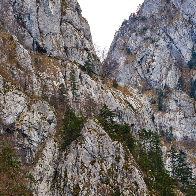 """Limestone mountains and forest"" stock image"