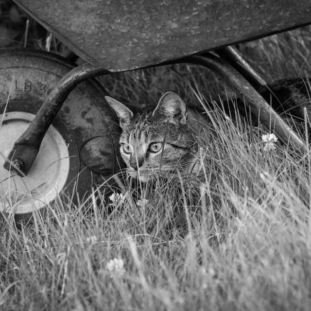 """Cat & Wheelbarrow"" stock image"