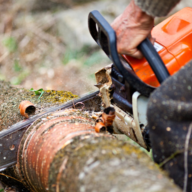"""Lumberjack cutting a tree trunk with chainsaw"" stock image"