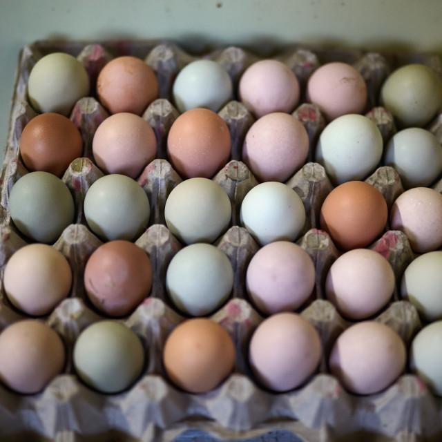 """Free range chicken eggs"" stock image"