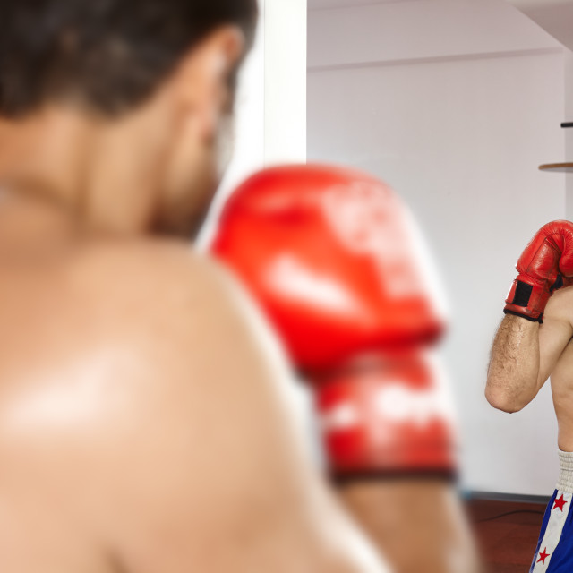 """Boxer looking in the mirror"" stock image"