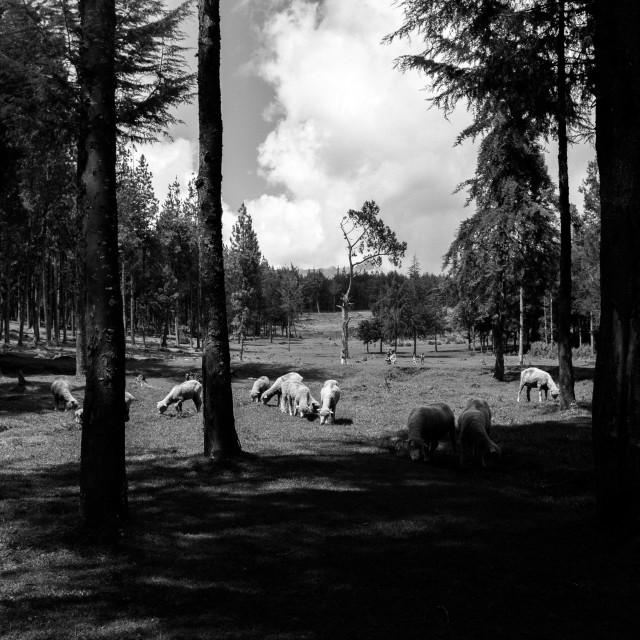 """Kenya Landscape"" stock image"