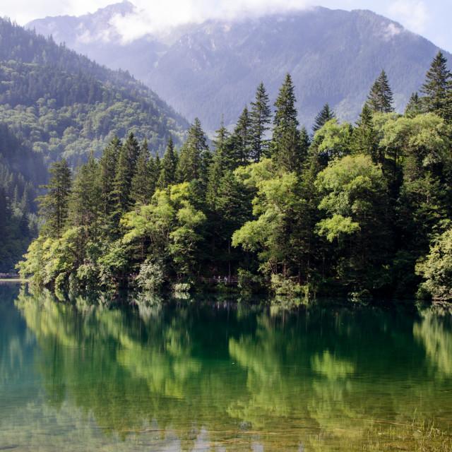 """Refections on Arrow Bamboo Lake"" stock image"