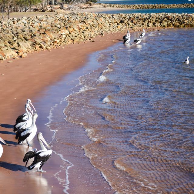 """Pelican paradise"" stock image"