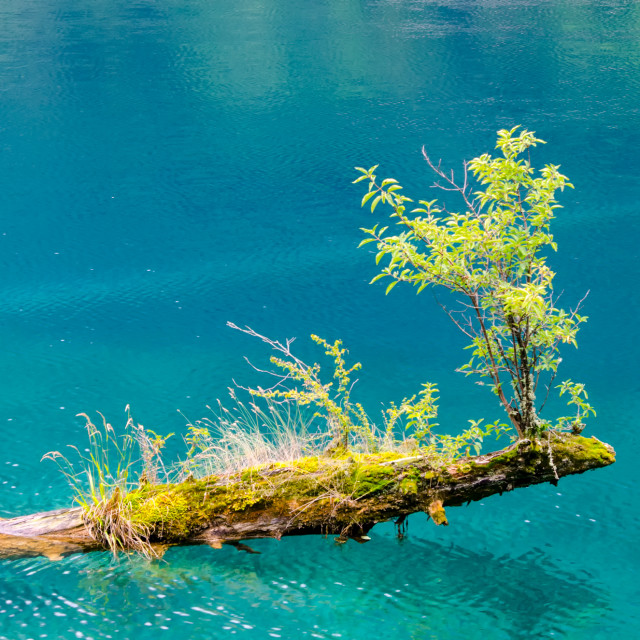 """Fallen Tree Reborn"" stock image"
