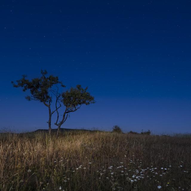 """Moonlight"" stock image"