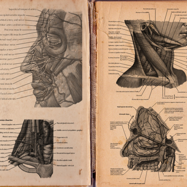 """""""didactic board of anatomy of Human respiratory systemold book texture"""" stock image"""