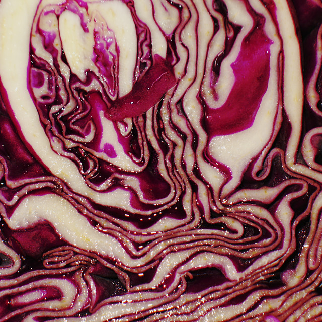"""Macro image of Cabbage vegetable cross section"" stock image"