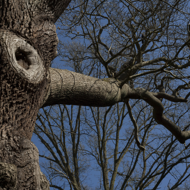"""""""Bare tree trunk and branches."""" stock image"""