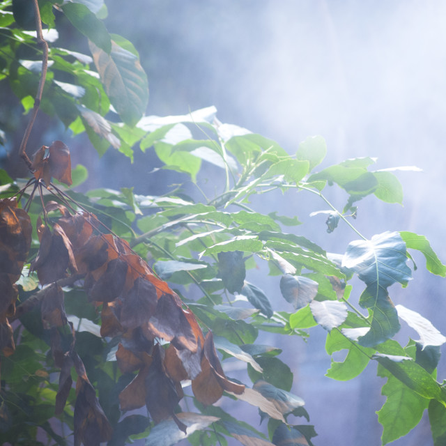 """Nature in the mist"" stock image"