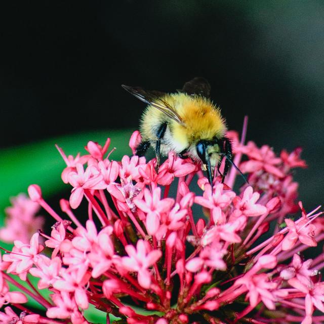 """Buzzy Bee"" stock image"