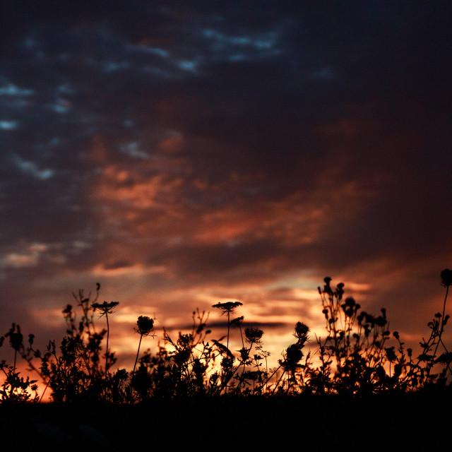 """Summer Sunset"" stock image"